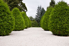 Garden alley Royalty Free Stock Photo