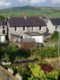 Vegetable garden: allotments stock photos