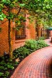 Garden along a brick walkway in downtown Lancaster, Pennsylvania Royalty Free Stock Images