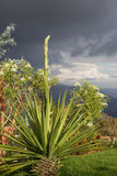 Garden at an altitude of 2000 meters. Colonia tovar, Venezuela. Royalty Free Stock Photography