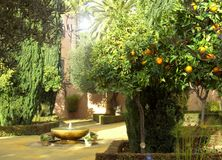 Garden in Andalucia. Garden with fountain and orange-trees in Andalucia Royalty Free Stock Image