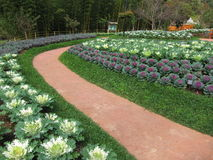 Garden in AngKhang Royalty Free Stock Images