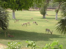 Garden with animals. Traditional royal garden in India with live animals walking around stock image