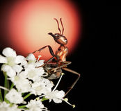 Garden ant on bouquet of flowers singing blues Royalty Free Stock Image