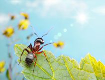 Garden ant catching sun beam Royalty Free Stock Image
