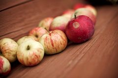 Garden apples. Small garden apples on brown wood bench. small GRIP stock photography