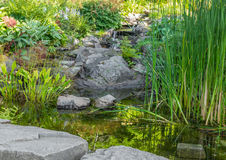 Garden with aquatic plants, pond and decorative stones Royalty Free Stock Image