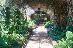 Garden arbor. With lush vegetation Royalty Free Stock Photo
