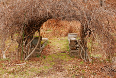 Garden Arch. Bare branches form a natural arbor arch over a garden path with stone benches in background Stock Photos