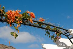 Garden arch with flowers Royalty Free Stock Photography