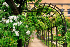 Garden arch. With green plants Royalty Free Stock Photo