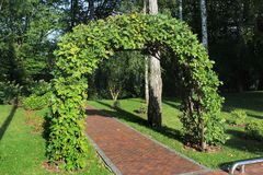 Garden arch made of intertwined oak branches.  Stock Image