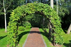 Garden arch made of intertwined oak branches.  Stock Images