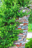 Garden arch in stone the conifers. The territory of the Central Siberian Botanical garden, Novosibirsk, Siberia, Russia - June 25, 2017: garden arch with Stock Photo