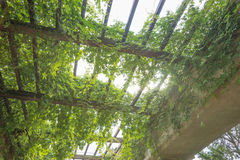 Garden archway pergola, Wroclaw Royalty Free Stock Images