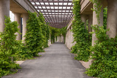 Garden archway pergola, Wroclaw Stock Image