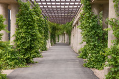 Garden archway pergola, Wroclaw Stock Images