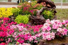 Garden arrangement at Hoan Kiem lake Royalty Free Stock Photo