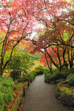 Garden in autumn royalty free stock photos
