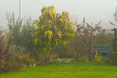 Garden autumn foggy morning Stock Image