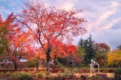 Garden in autumn at Fujikawaguchiko, Japan. Garden in autumn at Fujikawaguchiko, a resort town on the side of Lake Kawaguchi close to Mount Fuji, Japan royalty free stock photos