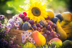 Garden autumn harvest fruit grass sunset Royalty Free Stock Images