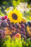 Garden autumn harvest fruit grass sunset Stock Photo