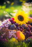 Garden autumn harvest fruit grass sunset Stock Image