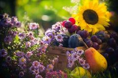 Garden autumn harvest fruit grass sunset Royalty Free Stock Image