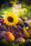 Garden autumn harvest fruit grass sunset Royalty Free Stock Photography