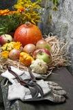 Garden autumn still life Stock Image