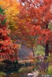 Garden in autumn time Stock Photo