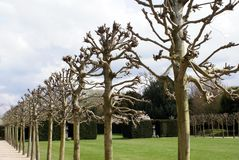 Garden with an avenue of plane trees pruned for the summer Royalty Free Stock Photos