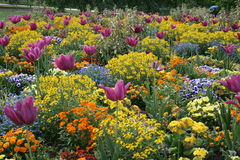 Garden. Awesome perspective of many colored flowers Stock Photo