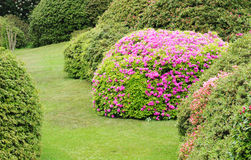 Garden with azalea Stock Image