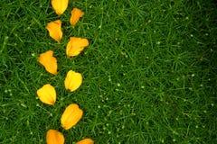 Garden backdround. Green texture with yellow petals Royalty Free Stock Photos