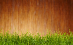 Garden  background Royalty Free Stock Image