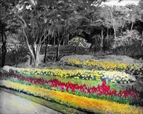 The garden background black and white flowers in the park. Landscape original oil painting on canvas color of Salvia flower and colorful flowers at roadside and Stock Photo