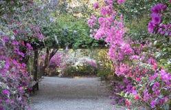 Garden Azaleas Blooming in Charleston, South Carolina SC royalty free stock image
