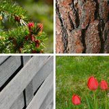 Garden backgrounds Royalty Free Stock Photos