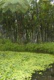 Garden of Balata Royalty Free Stock Image