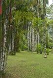 Garden of Balata Stock Images
