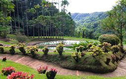 The garden of Balata, Martinique island, French West Indies.