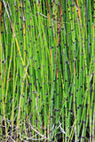Garden Bamboo Royalty Free Stock Images