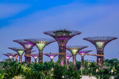 Garden by the Bay. Attraction Stock Photo