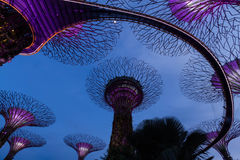 Garden by the bay Royalty Free Stock Image