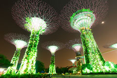 Garden by the bay at night. Garden by the bay light show at night. Singapore Stock Image