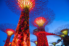 Garden by the bay Royalty Free Stock Photography