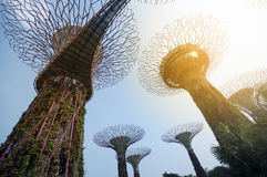 Garden by the Bay, Singapore. Royalty Free Stock Photos