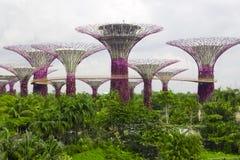 Garden by the bay ,Singapore Stock Photos